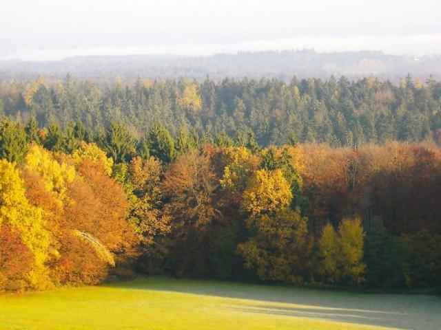 """Gasthof """"Zur Platte"""" - Waldrestaurant und Pension - Aussicht"""